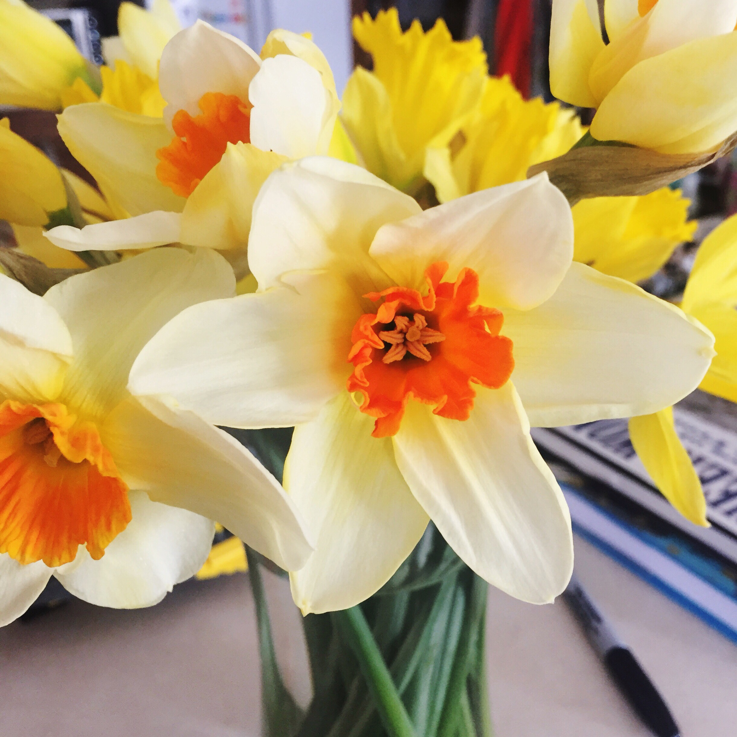 field daffodils from Trader Joe's